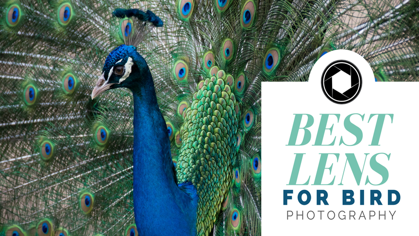 The Ultimate Lens Guide for Bird Photography