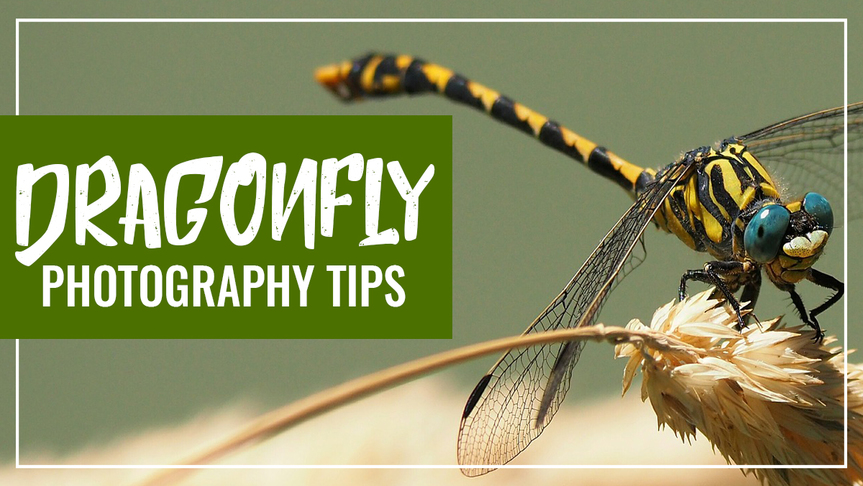Dragonfly Photography Tips