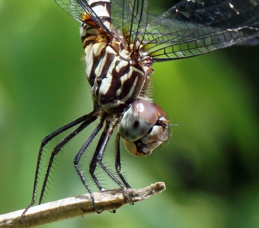 Dragonfly Photography by Earl Goodson