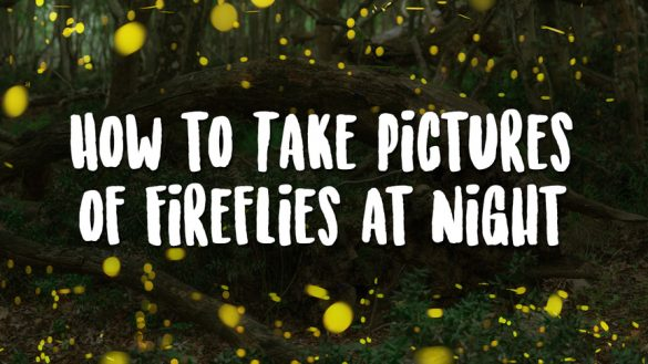 How to Take Pictures of Fireflies at Night