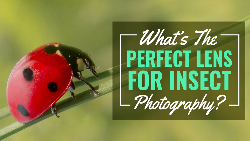 What's the Perfect Lens for Insect Photography?