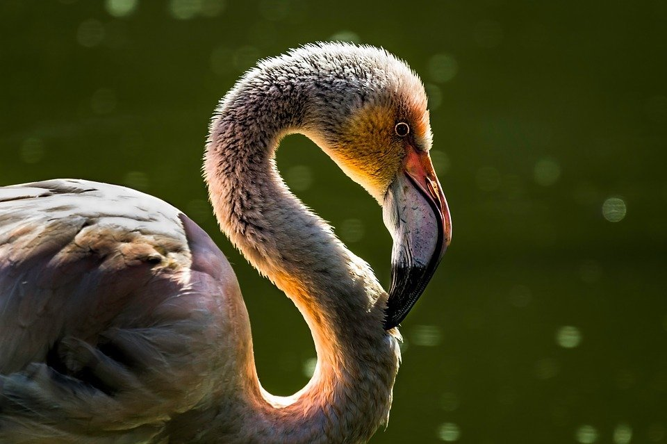 bird-fauna-beak-animal-pen-swan