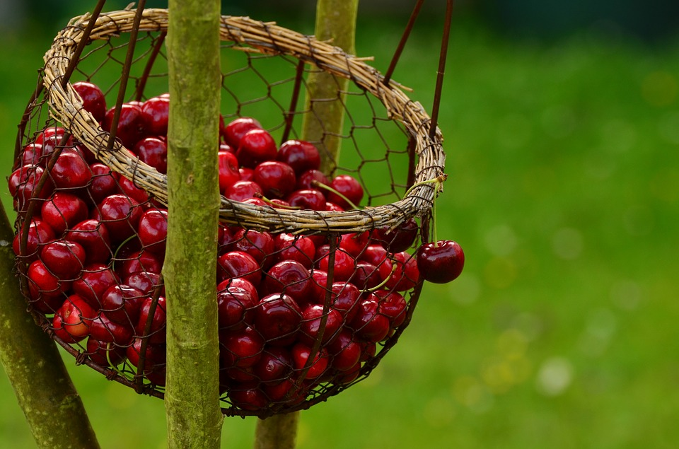 cherry dish photography