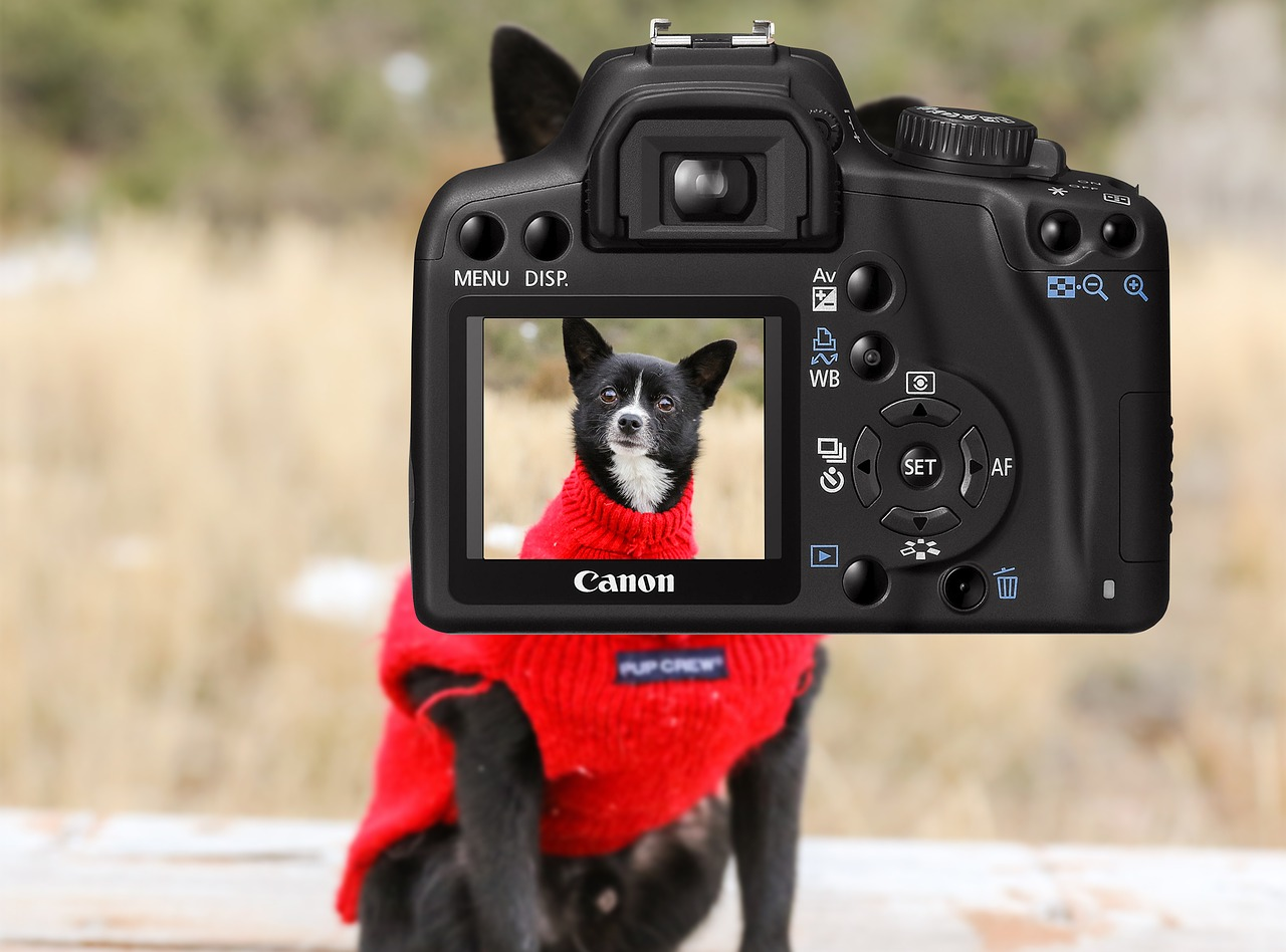 choosing a camera for pet photos