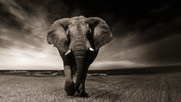 elephant-black-and-white-africa