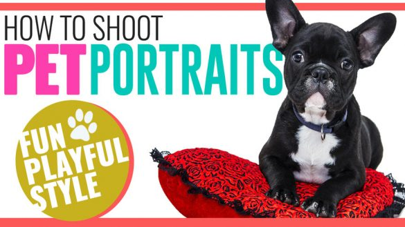how_to_shoot_fun_playful_pet_portraits