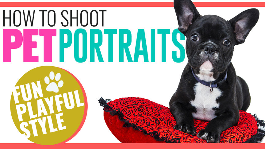 How to Shoot Fun Playful Pet Portraits