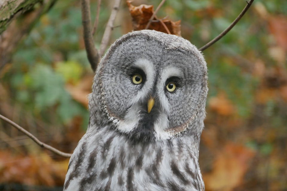 owl wildlife shot