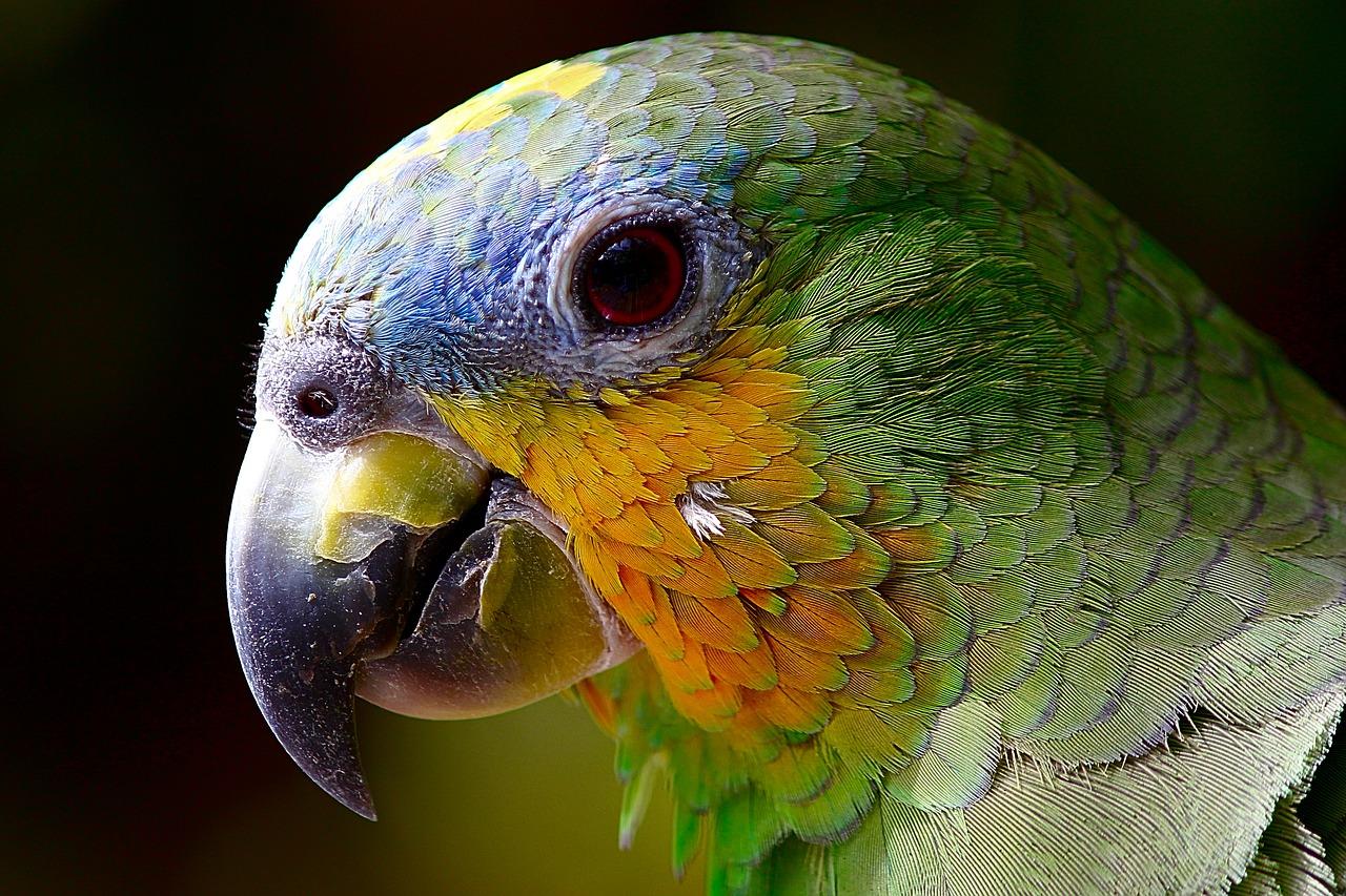 parrot Camera Canon EOS 60d macro lens