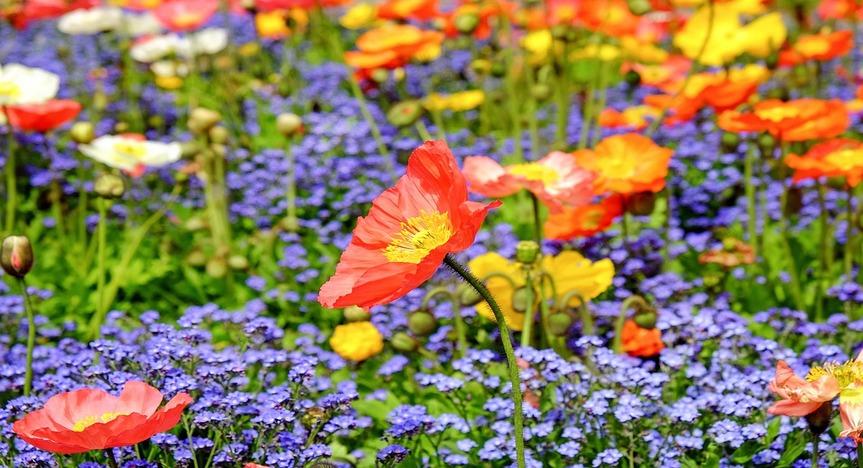 poppy-photography